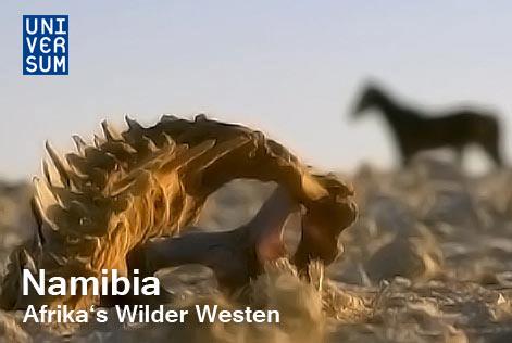 universum_namibia_afrika_wild_westen